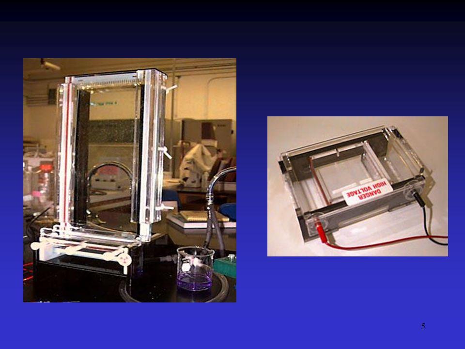 6 Eletroforese Suportes: Meio sólido: - Papel - Acetato de celulose Meio semi-sólido: - Gel de amido - Gel de agarose - Gel de poliacrilamida