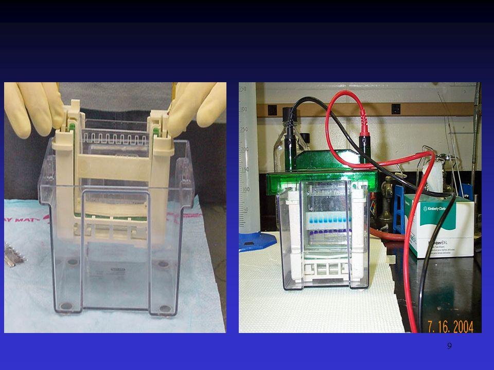 10 Eletroforese: a concentração do gel A concentração do gel definirá o tamanho dos poros a serem atravessados pelas moléculas em migração.