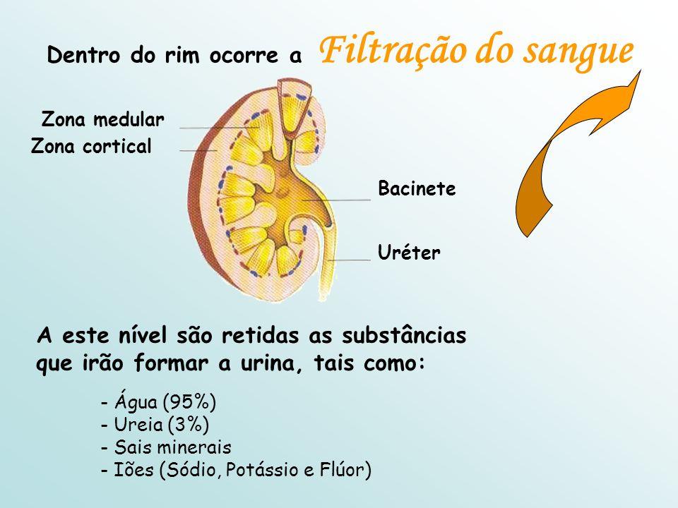 Dentro do rim ocorre a Filtração do sangue Bacinete Uréter Zona medular Zona cortical A este nível são retidas as substâncias que irão formar a urina, tais como: - Água (95%) - Ureia (3%) - Sais minerais - Iões (Sódio, Potássio e Flúor)