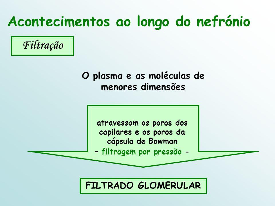 Acontecimentos ao longo do nefrónio Filtração O plasma e as moléculas de menores dimensões atravessam os poros dos capilares e os poros da cápsula de Bowman – filtragem por pressão - FILTRADO GLOMERULAR
