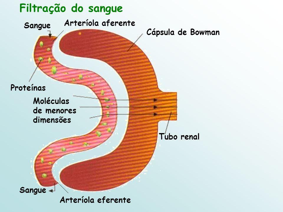 Sangue Tubo renal Cápsula de Bowman Sangue Filtração do sangue Arteríola aferente Arteríola eferente Moléculas de menores dimensões Proteínas