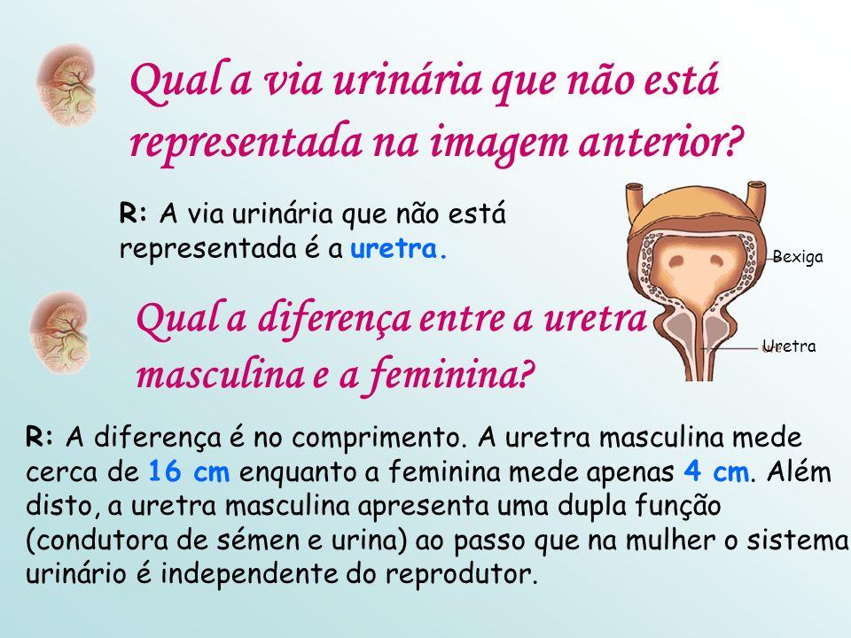 Qual a via urinária que não está representada na imagem anterior.