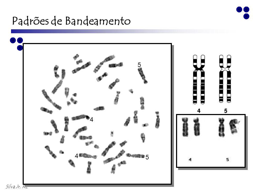 Silva Jr, RL 7 7 6 6 Padrões de Bandeamento