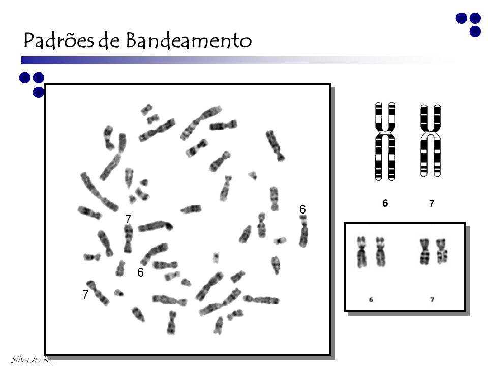 Silva Jr, RL 9 8 9 8 Padrões de Bandeamento