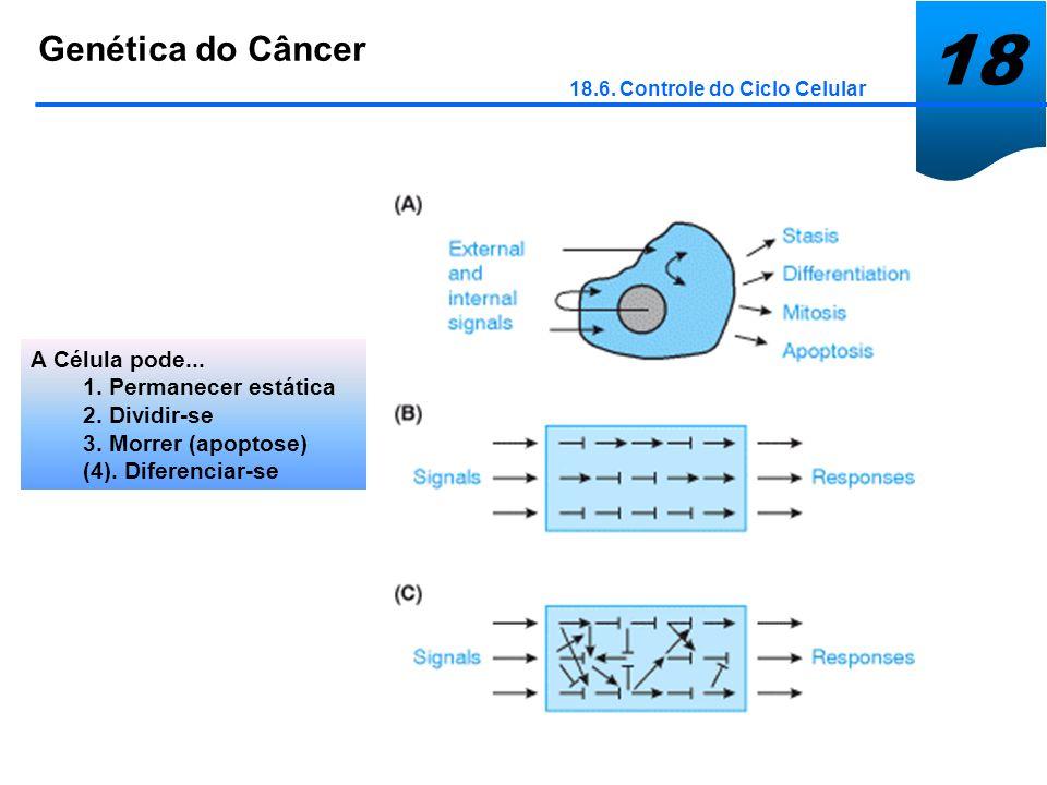 18 Genética do Câncer 18.6. Controle do Ciclo Celular A Célula pode... 1. Permanecer estática 2. Dividir-se 3. Morrer (apoptose) (4). Diferenciar-se