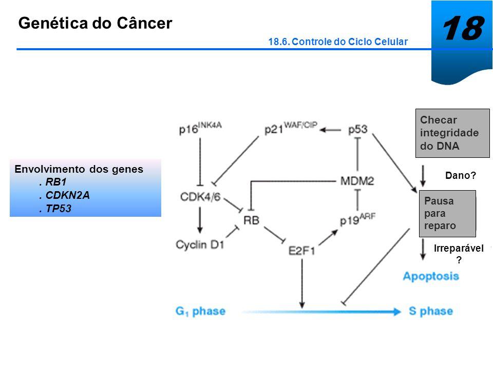 18 Genética do Câncer 18.6. Controle do Ciclo Celular Envolvimento dos genes. RB1. CDKN2A. TP53 Checar integridade do DNA Pausa para reparo Dano? Irre