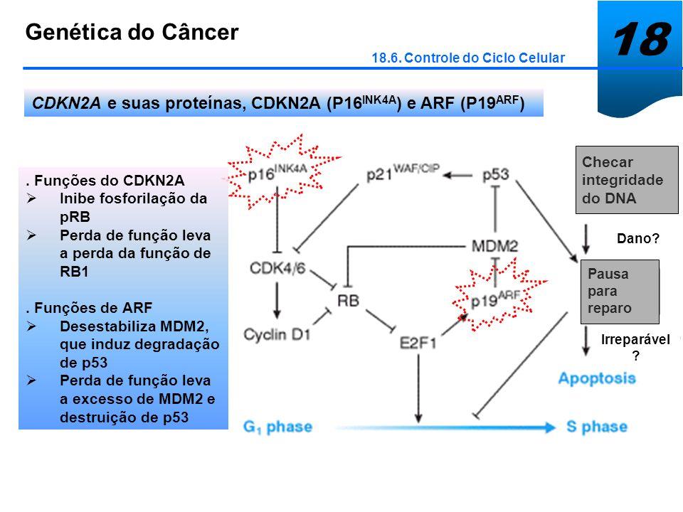 18 Genética do Câncer 18.6. Controle do Ciclo Celular CDKN2A e suas proteínas, CDKN2A (P16 INK4A ) e ARF (P19 ARF ) Checar integridade do DNA Pausa pa