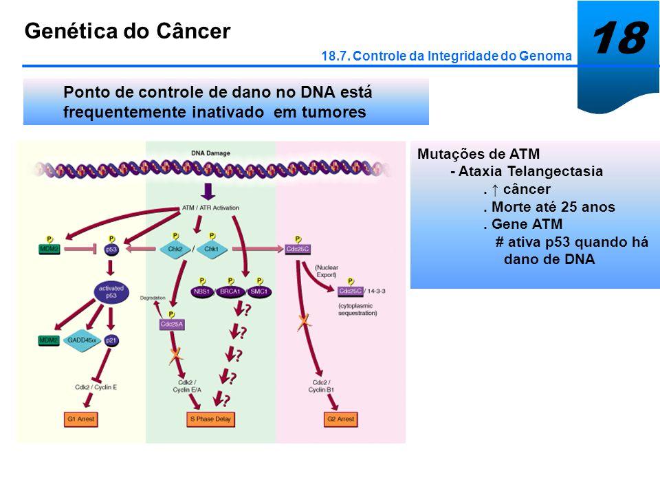 18 Genética do Câncer 18.7. Controle da Integridade do Genoma Ponto de controle de dano no DNA está frequentemente inativado em tumores Mutações de AT