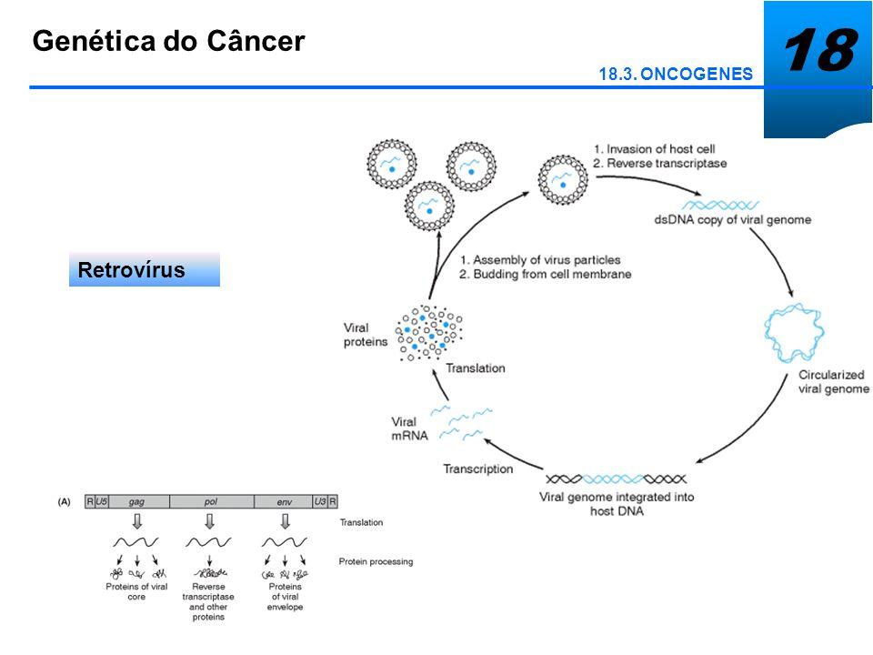 18 Genética do Câncer 18.3. ONCOGENES Retrovírus de Tranformação Aguda xx