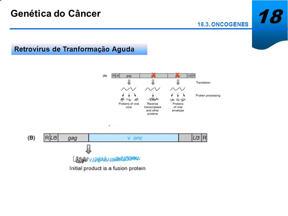18 Genética do Câncer 18.7. Controle da Integridade do Genoma Instabilidade cromossômica e câncer