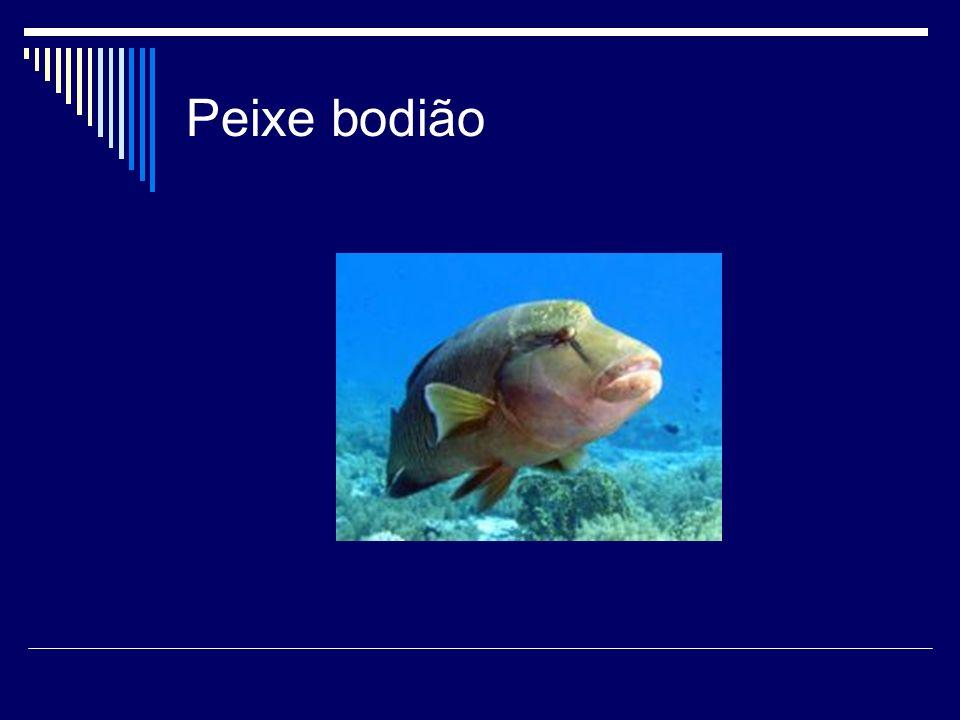 Peixe-palhaço As espécies assim designadas são nativas de uma vasta região compreendida em águas quentes do Pacífico, coexistindo algumas espécies em algumas dessas regiões.