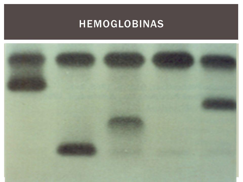 HEMOGLOBINAS