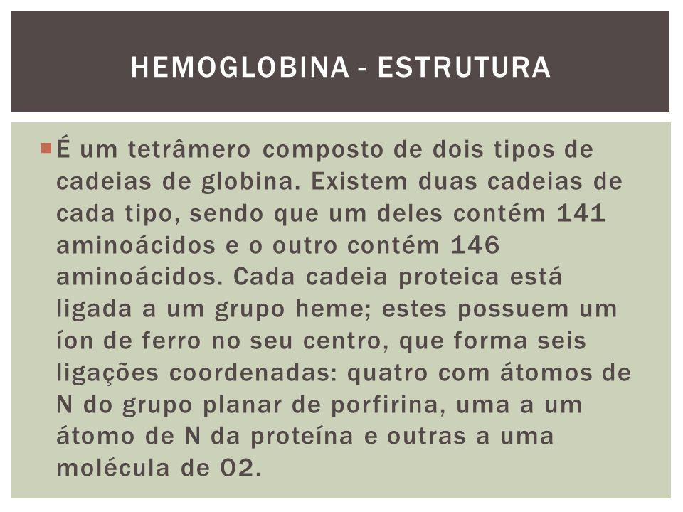HEMOGLOBINA - ESTRUTURA É um tetrâmero composto de dois tipos de cadeias de globina. Existem duas cadeias de cada tipo, sendo que um deles contém 141