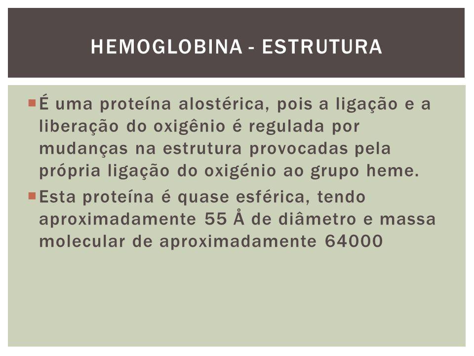 HEMOGLOBINA - ESTRUTURA É uma proteína alostérica, pois a ligação e a liberação do oxigênio é regulada por mudanças na estrutura provocadas pela própr