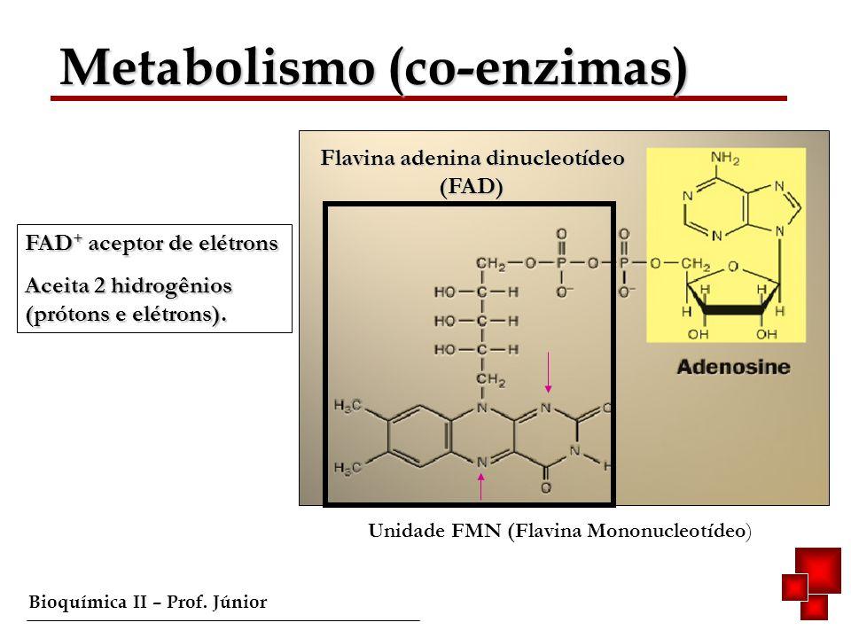 Bioquímica II – Prof. Júnior Metabolismo (co-enzimas) Flavina adenina dinucleotídeo (FAD) FAD + aceptor de elétrons Aceita 2 hidrogênios (prótons e el