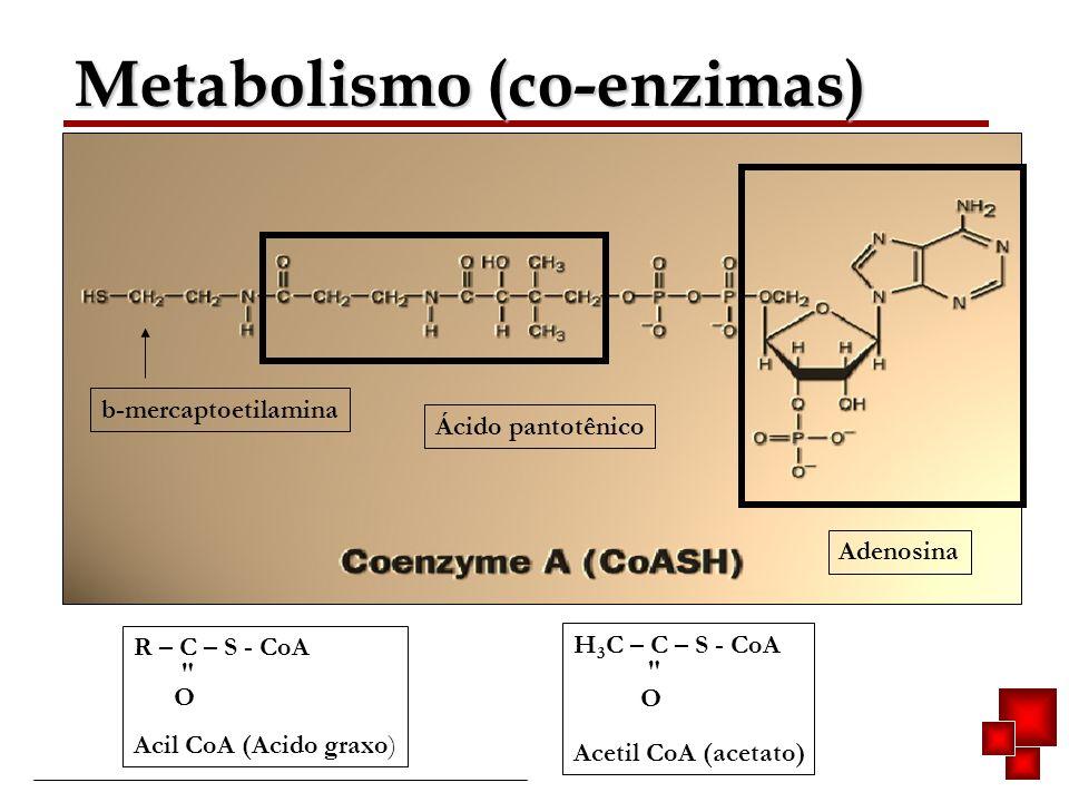 Bioquímica II – Prof. Júnior Metabolismo (co-enzimas) Ácido pantotênico Adenosina b-mercaptoetilamina R – C – S - CoA