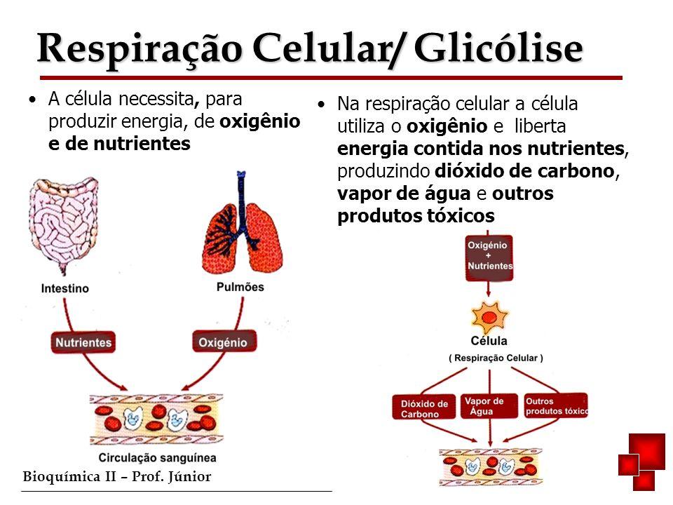 Bioquímica II – Prof. Júnior A célula necessita, para produzir energia, de oxigênio e de nutrientes Na respiração celular a célula utiliza o oxigênio