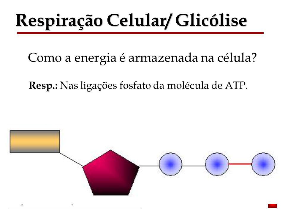Bioquímica II – Prof. Júnior Como a energia é armazenada na célula? Resp.: Nas ligações fosfato da molécula de ATP. Respiração Celular/ Glicólise