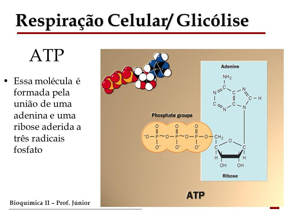 Bioquímica II – Prof. Júnior ATP Essa molécula é formada pela união de uma adenina e uma ribose aderida a três radicais fosfato Respiração Celular/ Gl