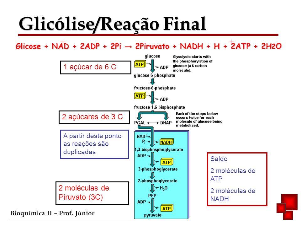 Bioquímica II – Prof. Júnior 2 açúcares de 3 C 1 açúcar de 6 C A partir deste ponto as reações são duplicadas 2 moléculas de Piruvato (3C) Saldo 2 mol