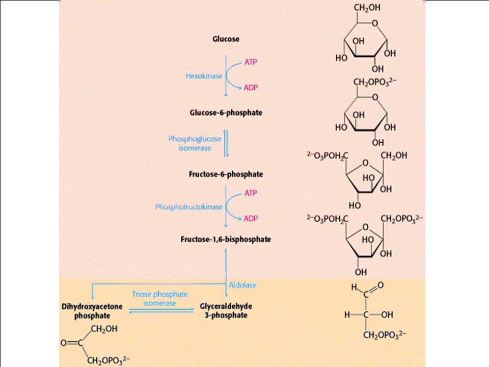 Bioquímica II – Prof. Júnior