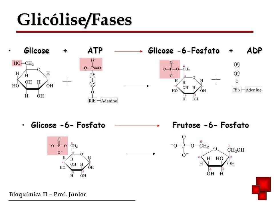 Glicólise/Fases Glicólise/Fases Glicose + ATP Glicose -6-Fosfato + ADP Glicose + ATP Glicose -6-Fosfato + ADP Glicose -6- Fosfato Frutose -6- Fosfato