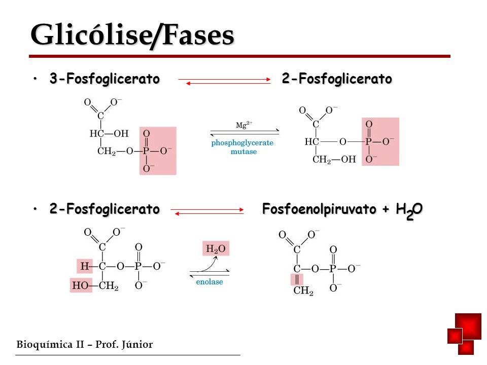 Bioquímica II – Prof. Júnior 3-Fosfoglicerato 2-Fosfoglicerato 3-Fosfoglicerato 2-Fosfoglicerato 2-Fosfoglicerato Fosfoenolpiruvato + H O 2-Fosfoglice