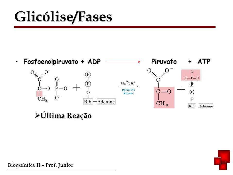Bioquímica II – Prof. Júnior Fosfoenolpiruvato + ADP Piruvato + ATP Fosfoenolpiruvato + ADP Piruvato + ATP Última Reação Última Reação Glicólise/Fases