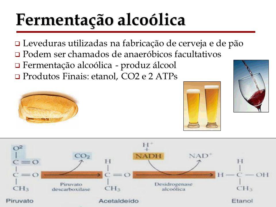 Bioquímica II – Prof. Júnior Fermentação alcoólica Leveduras utilizadas na fabricação de cerveja e de pão Podem ser chamados de anaeróbicos facultativ