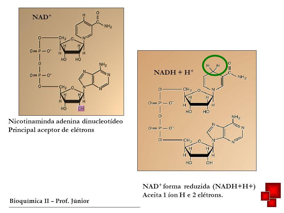 Bioquímica II – Prof. Júnior NAD + Nicotinaminda adenina dinucleotídeo Principal aceptor de elétrons NADH + H + NAD + forma reduzida (NADH+H+) Aceita