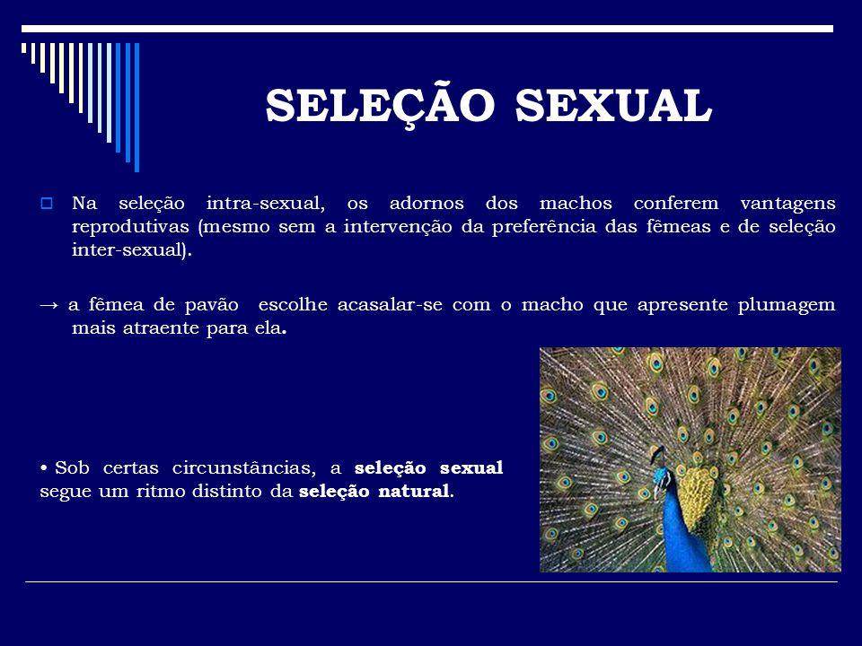 Na seleção intra-sexual, os adornos dos machos conferem vantagens reprodutivas (mesmo sem a intervenção da preferência das fêmeas e de seleção inter-s