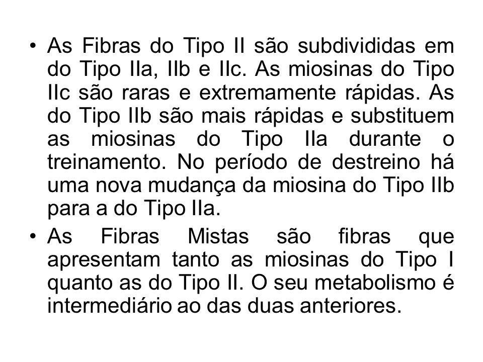 As Fibras do Tipo II são subdivididas em do Tipo IIa, IIb e IIc. As miosinas do Tipo IIc são raras e extremamente rápidas. As do Tipo IIb são mais ráp