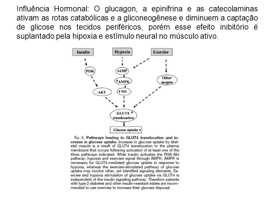Influência Hormonal: O glucagon, a epinifrina e as catecolaminas ativam as rotas catabólicas e a gliconeogênese e diminuem a captação de glicose nos t