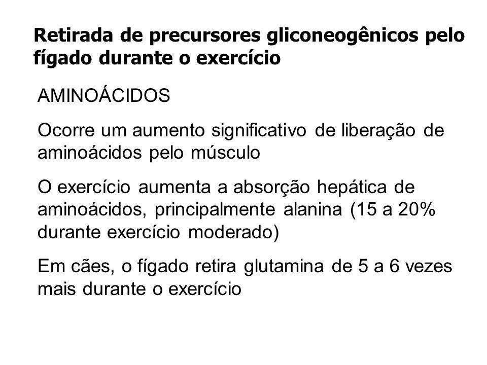 Retirada de precursores gliconeogênicos pelo fígado durante o exercício AMINOÁCIDOS Ocorre um aumento significativo de liberação de aminoácidos pelo m