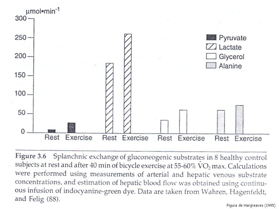 GLICOGÊNIOGLICONEOGÊNESE GLICEROL LACTATO AMINOÁCIDOS TEC.