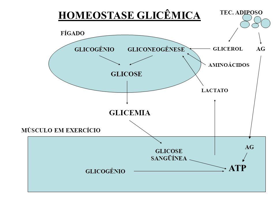 GLICOGÊNIOGLICONEOGÊNESE GLICEROL LACTATO AMINOÁCIDOS TEC. ADIPOSO AG GLICEMIA GLICOSE SANGÜÍNEA GLICOSE GLICOGÊNIO ATP MÚSCULO EM EXERCÍCIO FÍGADO HO