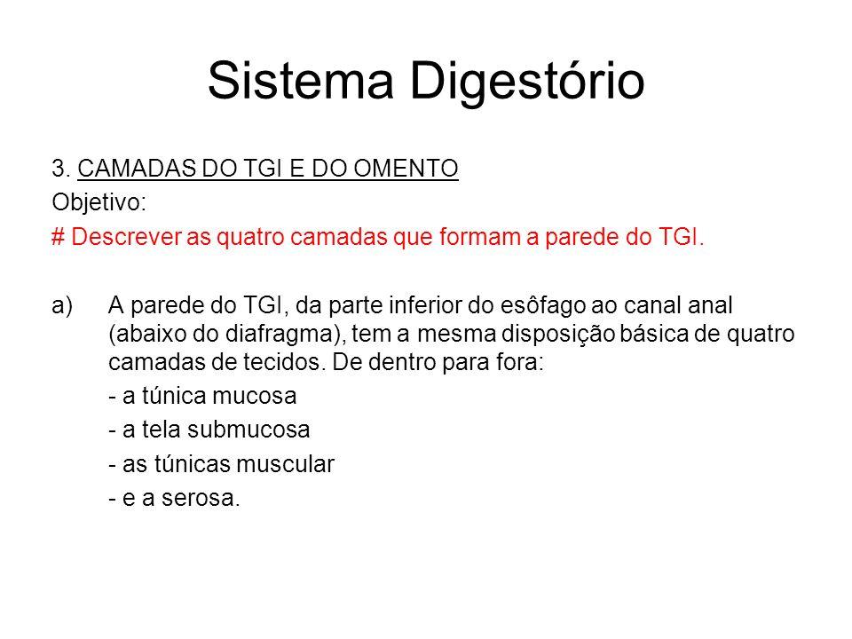 Sistema Digestório 3.