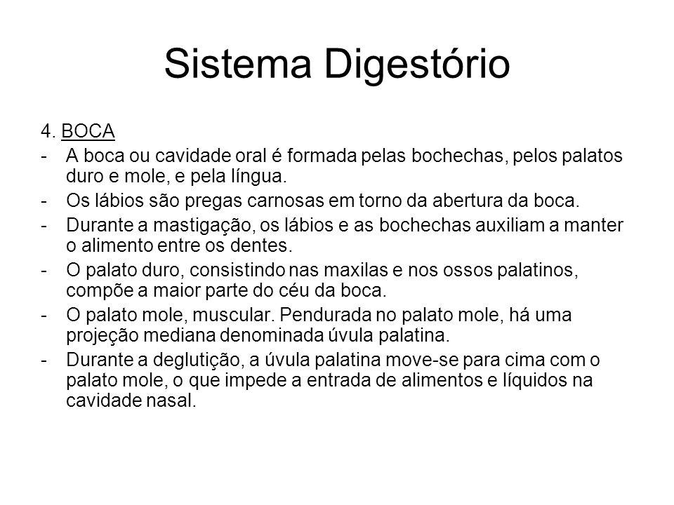 Sistema Digestório 4.