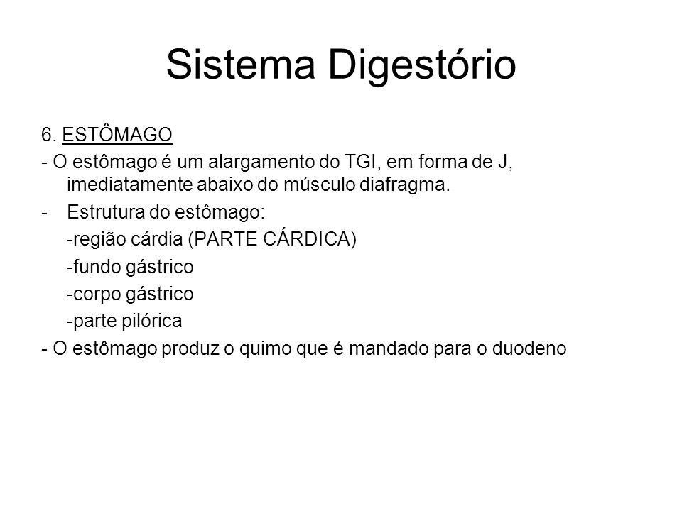 Sistema Digestório 6.