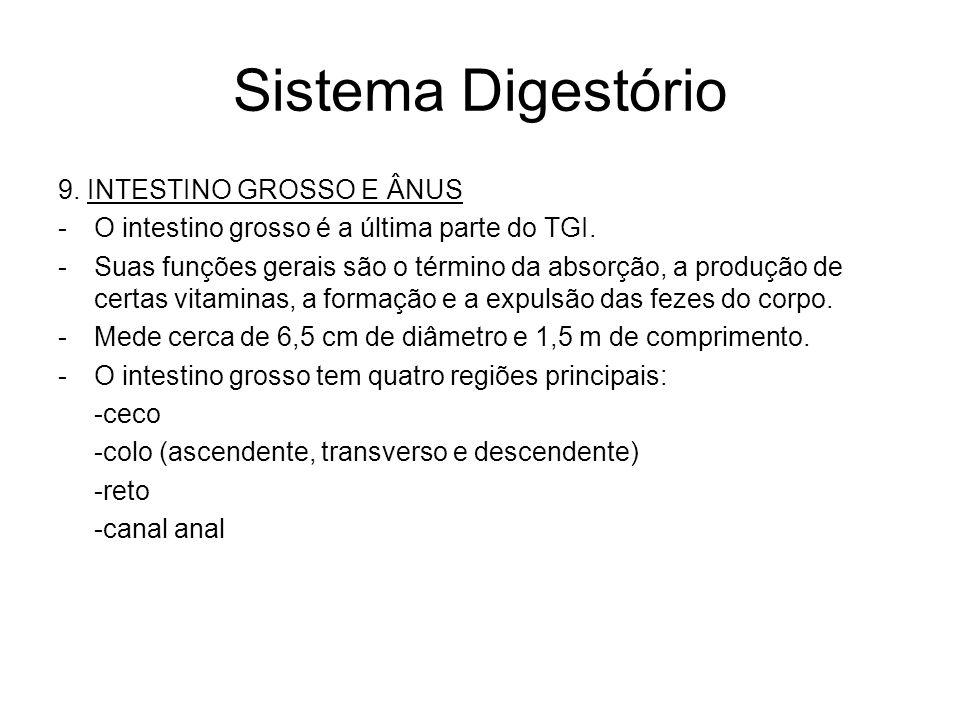 Sistema Digestório 9.INTESTINO GROSSO E ÂNUS -O intestino grosso é a última parte do TGI.