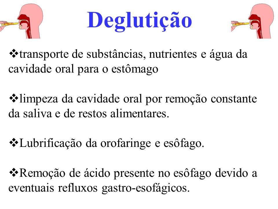 Deglutição transporte de substâncias, nutrientes e água da cavidade oral para o estômago limpeza da cavidade oral por remoção constante da saliva e de restos alimentares.