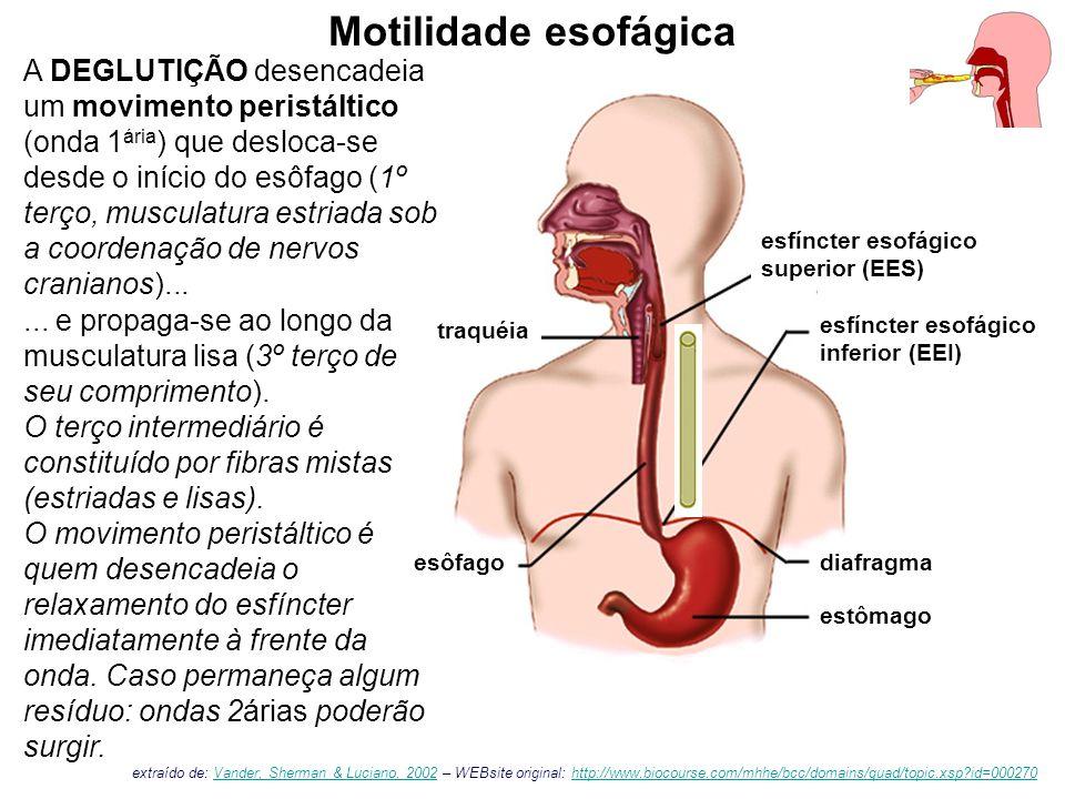 esfíncter esofágico superior (EES) esfíncter esofágico inferior (EEI) Motilidade esofágica esôfagodiafragma estômago traquéia A DEGLUTIÇÃO desencadeia um movimento peristáltico (onda 1 ária ) que desloca-se desde o início do esôfago (1º terço, musculatura estriada sob a coordenação de nervos cranianos)......