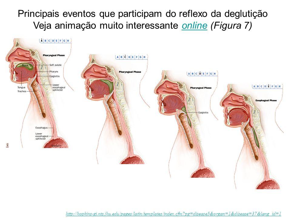 Principais eventos que participam do reflexo da deglutição Veja animação muito interessante online (Figura 7)online http://hopkins-gi.nts.jhu.edu/pages/latin/templates/index.cfm?pg=disease5&organ=1&disease=37&lang_id=1