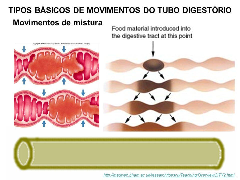 Movimentos de mistura TIPOS BÁSICOS DE MOVIMENTOS DO TUBO DIGESTÓRIO http://medweb.bham.ac.uk/research/toescu/Teaching/OverviewGITY2.html
