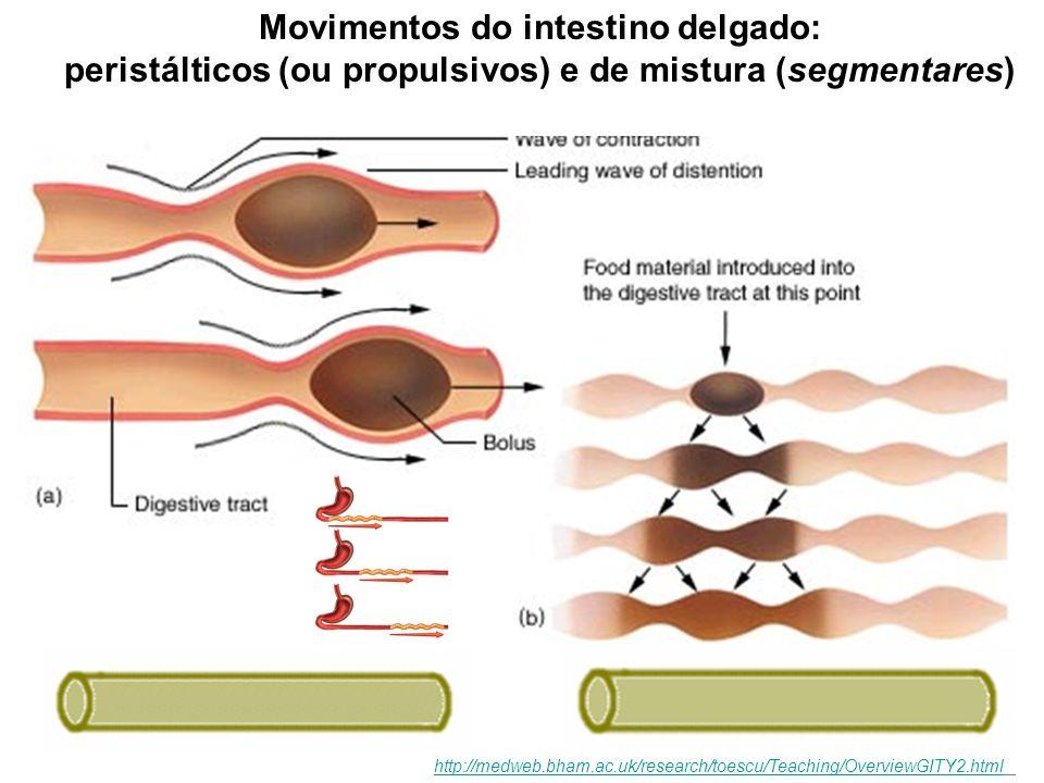 Movimentos peristálticos (ou propulsivos) TIPOS BÁSICOS DE MOVIMENTOS DO TUBO DIGESTÓRIO http://medweb.bham.ac.uk/research/toescu/Teaching/OverviewGIT