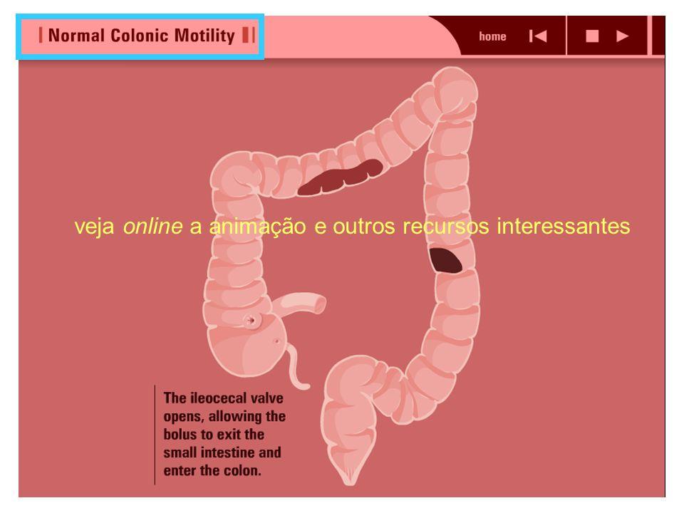Motilidade do Intestino Grosso Contrações haustrais ou de mistura Movimentos segmentares lentos que movem a massa fecal pelo cólon, favorecem a absorç