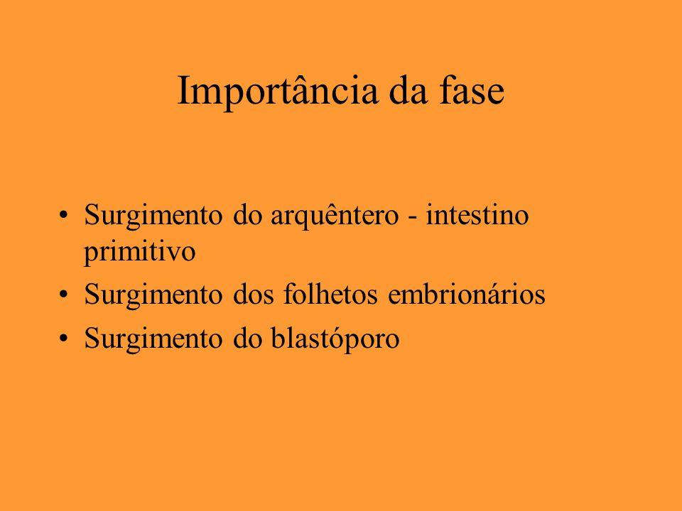 Importância da fase Surgimento do arquêntero - intestino primitivo Surgimento dos folhetos embrionários Surgimento do blastóporo