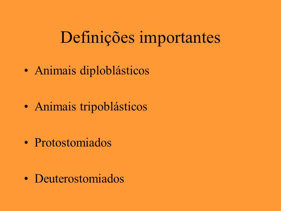 Definições importantes Animais diploblásticos Animais tripoblásticos Protostomiados Deuterostomiados