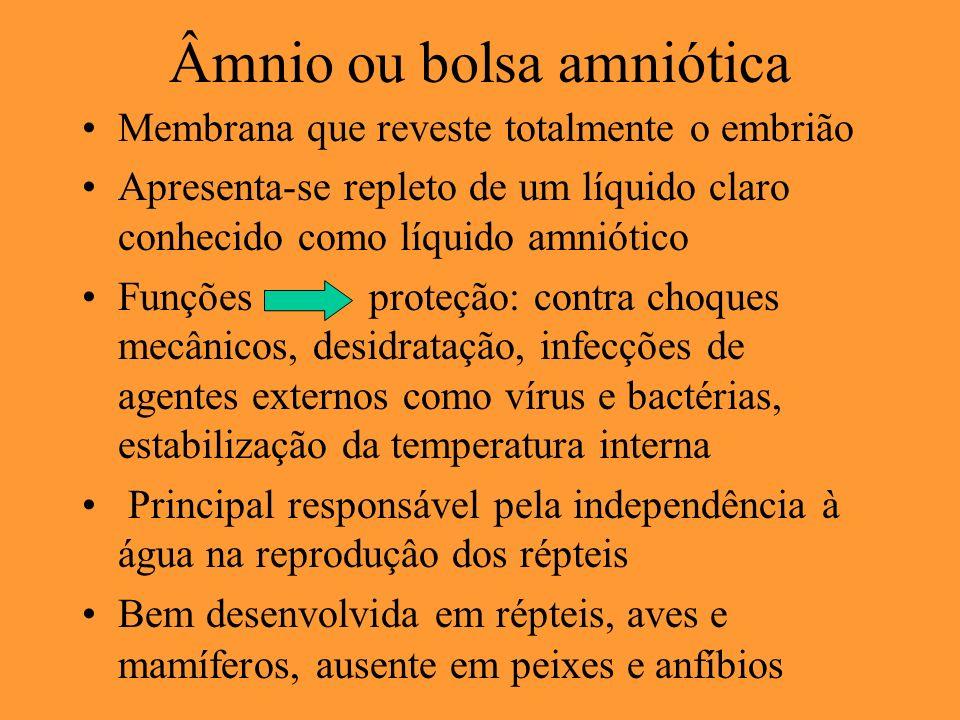 Âmnio ou bolsa amniótica Membrana que reveste totalmente o embrião Apresenta-se repleto de um líquido claro conhecido como líquido amniótico Funções p