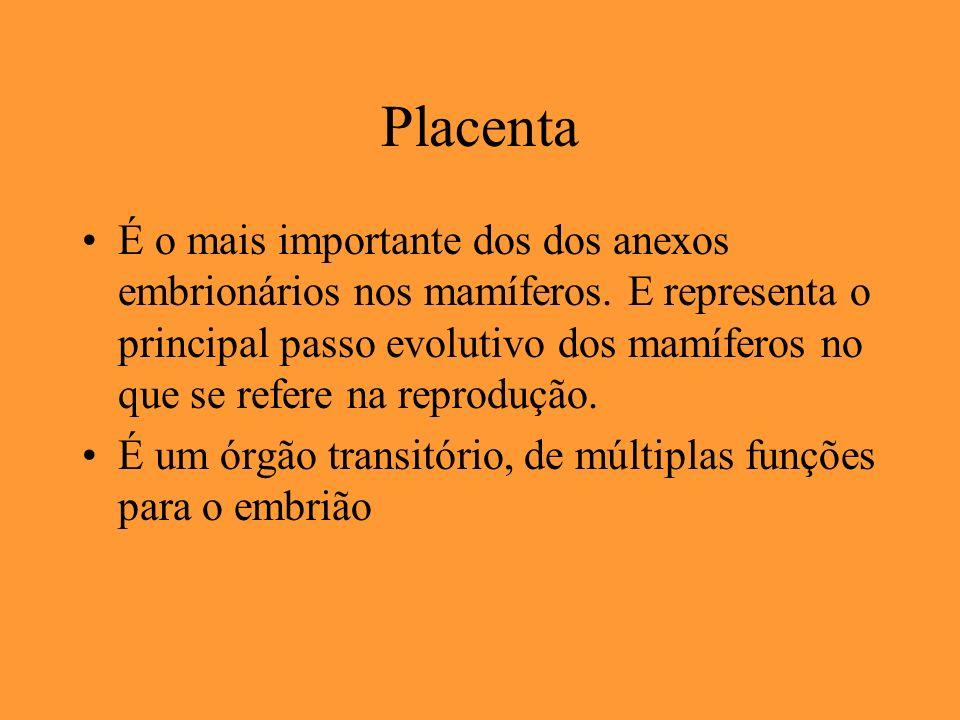 Placenta É o mais importante dos dos anexos embrionários nos mamíferos. E representa o principal passo evolutivo dos mamíferos no que se refere na rep